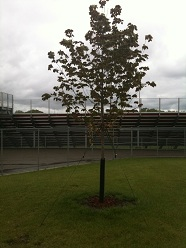 Tyler Hill Memorial Tree planted at Mound Westonka High School